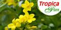 Tropicaflore Logo